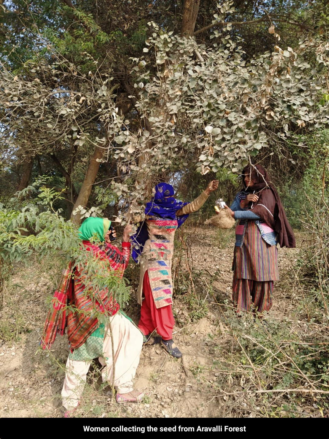 """<span  class=""""uc_style_uc_tiles_grid_image_elementor_uc_items_attribute_title"""" style=""""color:#ffffff;"""">Local women collecting seeds from the aravali forest</span>"""